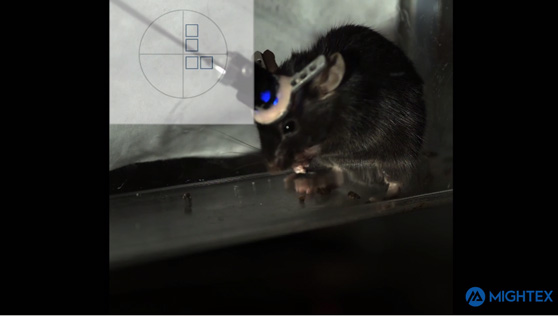 Freely behaving targeted optogenetics using the Mightex OASIS Implant and Polygon
